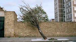 Zed_Nelson_HACKNEY_tree-300x168